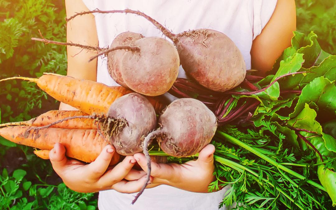 4 Gründe, weshalb eine ausgewogene Ernährung der nachhaltige Weg für deine Gesundheit ist